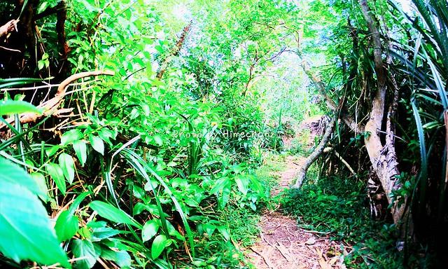 ジャングルを歩きます