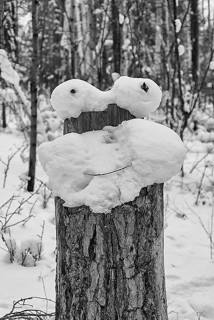 Winter white mushrooms