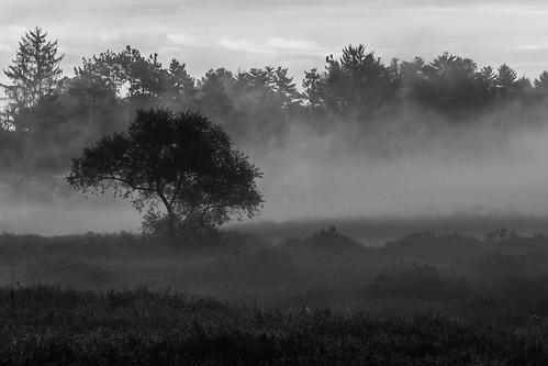 bw blackandwhite mist tree fog concordma canon5dmarkii