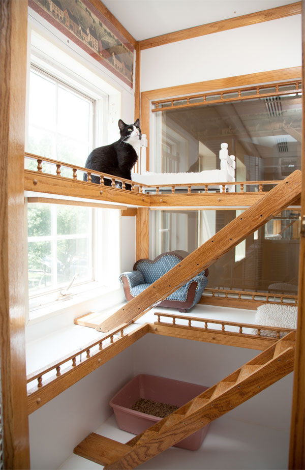 luxury-cat-hotel-tall