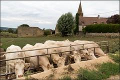 Photo of Quarré-les-Tombes