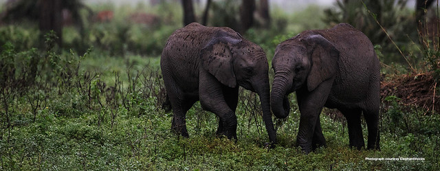 babyelephants