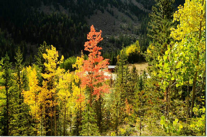 Fall colors at Guanella Pass, Colorado (8)