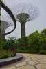 Supertree grove with OCBC skywalk in the Gardens by the Bay in Singapore by UweBKK (α 77 on )