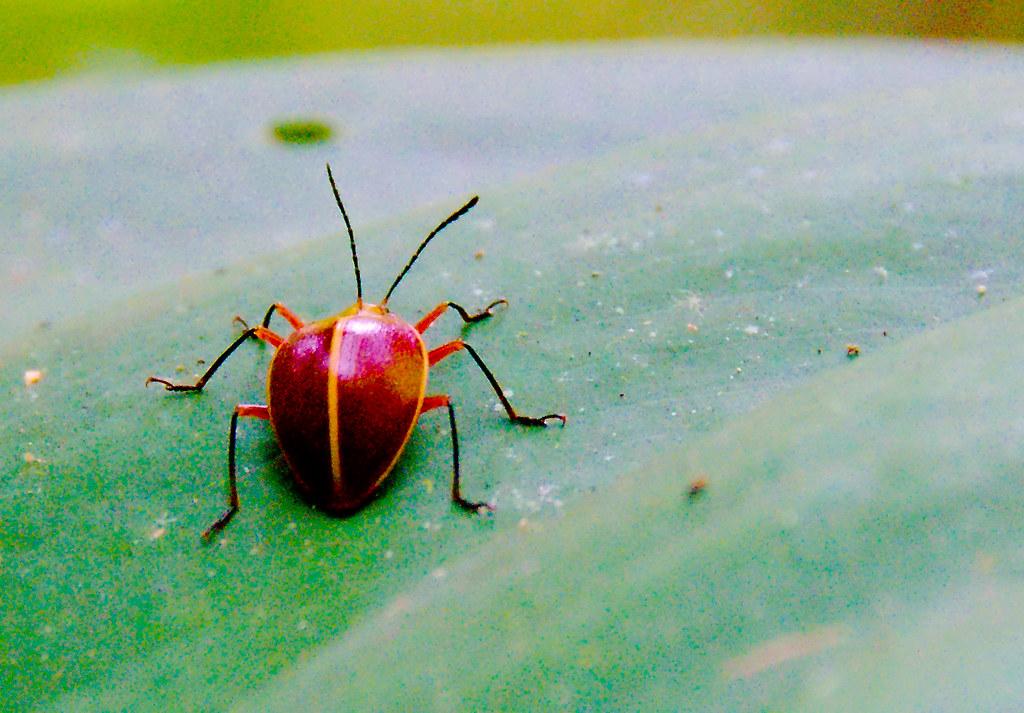03_Bug