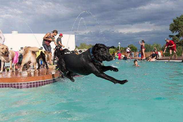 Fort Collins Pooch Plunge