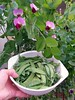 Snow pea flowers and pods