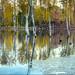 trees in the water by jody9