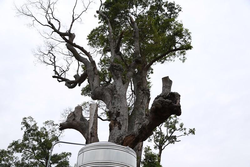 戶外導覽, 比讚的樹