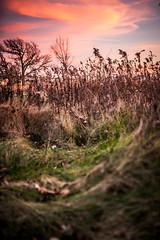 Sunset. McDonald Woods Forest Preserve