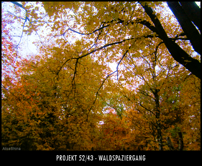 Projekt 52/43 - Waldspaziergang