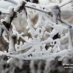 Selección de fotos de la helada en La Guardia (Toledo)