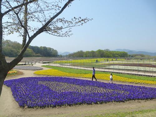 Co-Gyeongju-Parc Wolseong (2)