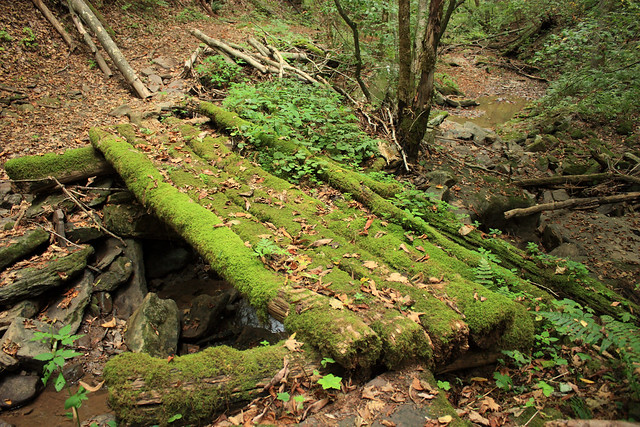 20150829_New_River_Gorge_010