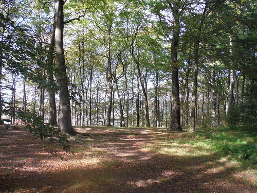 Sharpenhoe Hillfort Site (now wooded)