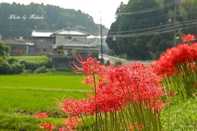 柿 by Nakabo