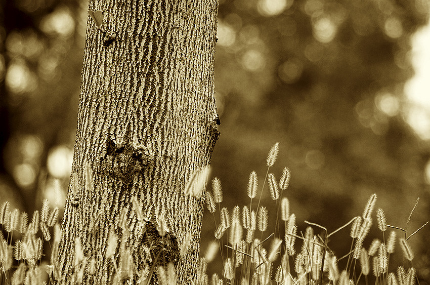 Sepia ~ 褐色調練習曲