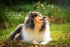 Denzil | Dog Photography Bedfordshire