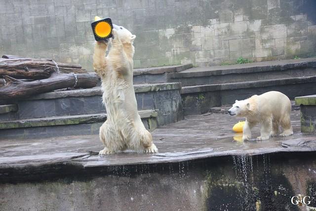 Besuch Zoo Rostock 17.10.201529