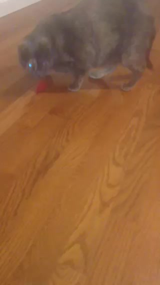 kitty video2
