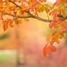 Colores de otoño by María Bellet Fotografía