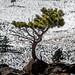Rocky Mountain National Park by wilsonaxpe