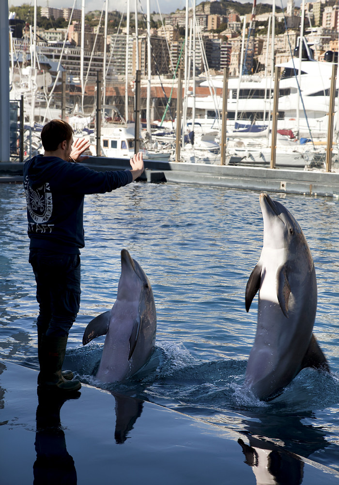 Acquario di Genova, delfini