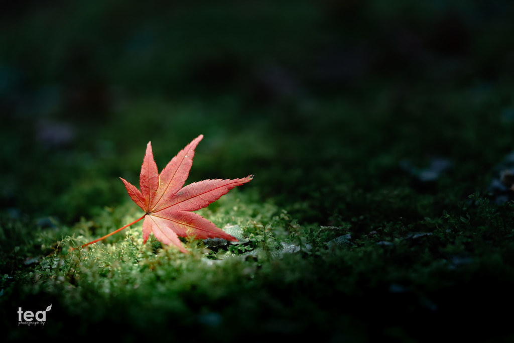 The end of fall | α7RII + SONY FE 90mm F2.8 Macro G OSS