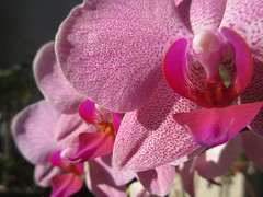 Pink Orchids on a Sunny Day