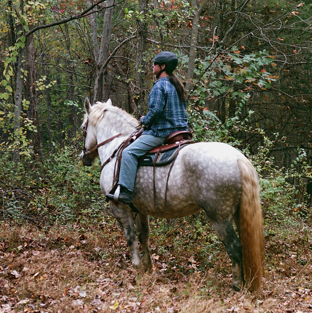 trail ride on the dappled Grey