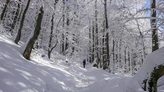 Zimowy las - podejscie na Połoninę Wetlińską
