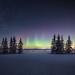 Aurora by Sandra Herber