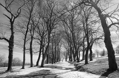 bw snow tree worldsend hingham trusteesofreservations blackandwhite monochrome avenue