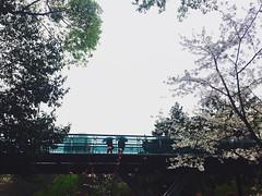 ☂️☂️ #shanghai #intherain #walkandshoot #Spring #iphone