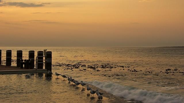 Birds in an Atlantic Sunset