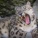 Cincinnati Zoo 8-20-15-8111 by joemastrullo