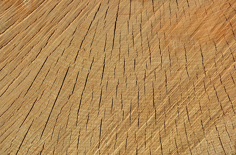 Wood Texture #10
