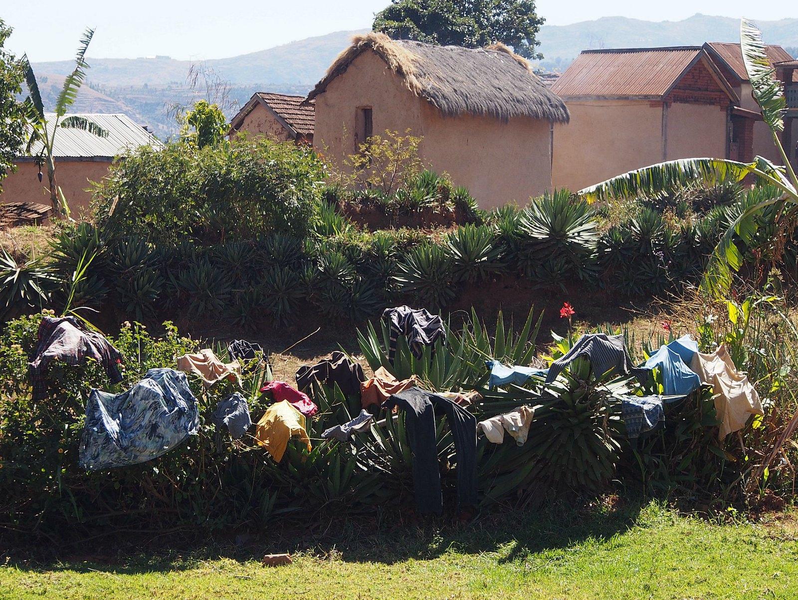 Pyykinkuivausta kaktusten päällä