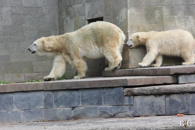 Zoo Rostock 19.09.2015136