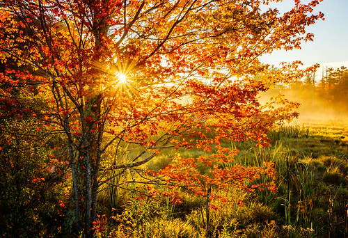 autumn trees fall digital sunrise us unitedstates connecticut waterfalls marsh photographicart granby bog wetland naturephotographer endersfalls landscapephotographer endersstateforest connecticutphotographer