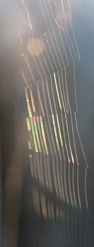 Web Rainbow IMG_3529