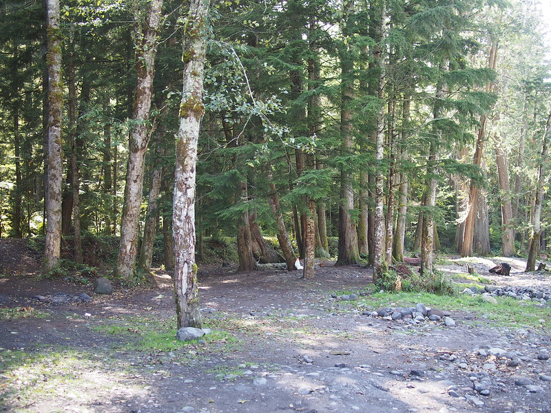Mount Rainier National Park Camping Area: Adjacent to the carbon river