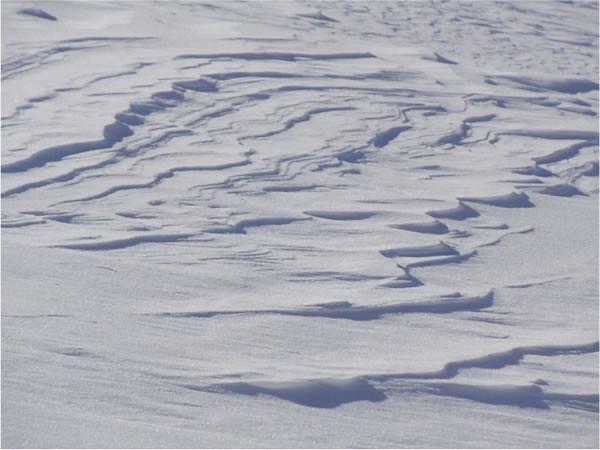 Snowbird crust
