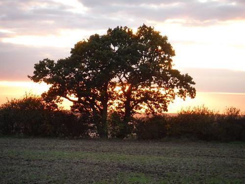 Evening Sun behind Tree