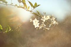 Fleurs dans la brume