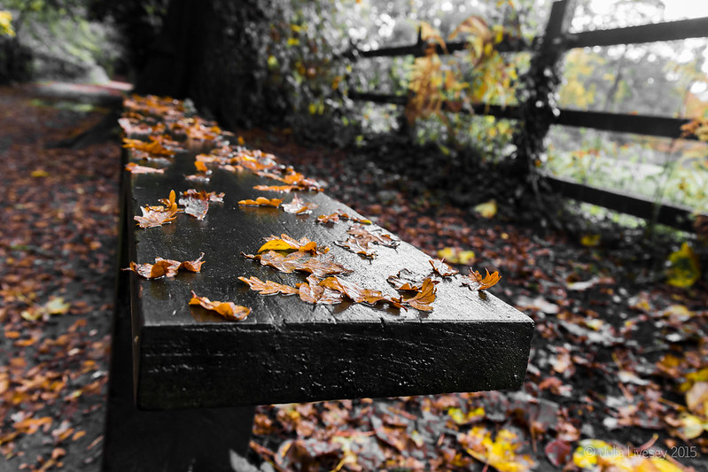 Leaves n a wet bench