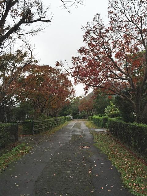 2016陽明山楓紅