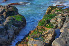 HDR Seaweed