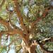 The tree ver 2