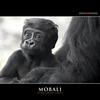MOBALI by Matthias Besant
